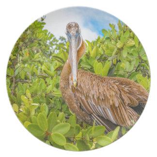 Großer Pelikan am Baum, Galapagos, Ecuador Melaminteller