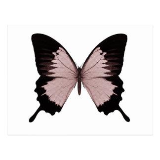 Großer roter u. schwarzer Schmetterling Postkarten