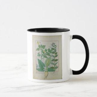 Größerer Celandine oder Mohnblume Tasse