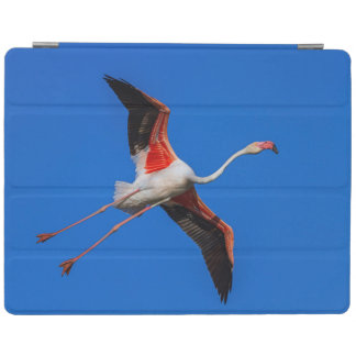 Größerer Flamingo, phoenicopterus roseus iPad Smart Cover