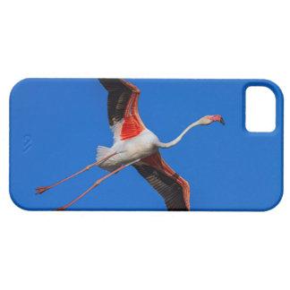 Größerer Flamingo, phoenicopterus roseus iPhone 5 Etui
