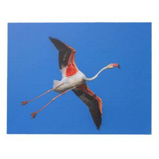 Größerer Flamingo, phoenicopterus roseus Notizblock