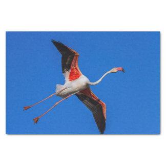 Größerer Flamingo, phoenicopterus roseus Seidenpapier