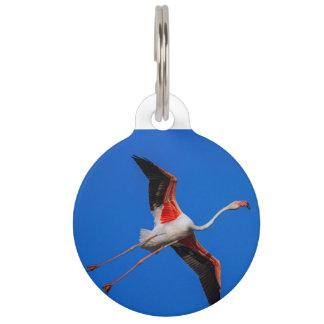 Größerer Flamingo, phoenicopterus roseus Tiermarke