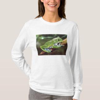 Großes Auge Treefrog, Leptopelis vermiculatus, T-Shirt