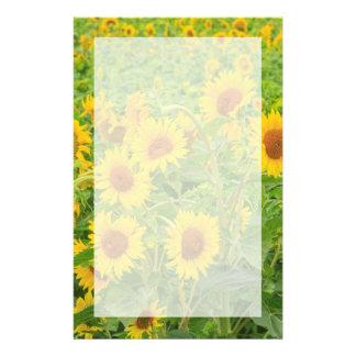 Großes Feld der Sonnenblumen nähern sich Moses Briefpapier