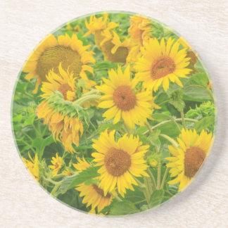 Großes Feld der Sonnenblumen nähern sich Moses Sandstein Untersetzer