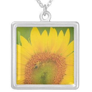 Großes Feld der Sonnenblumen nähern sich Moses Versilberte Kette