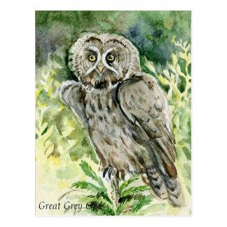 Großes Grau-Eulen-Aquarell Postkarte