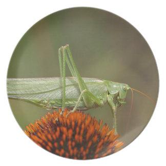 Großes grünes Bush-Kricket (Tettigonia Melaminteller