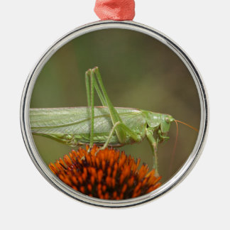 Großes grünes Bush-Kricket (Tettigonia Rundes Silberfarbenes Ornament