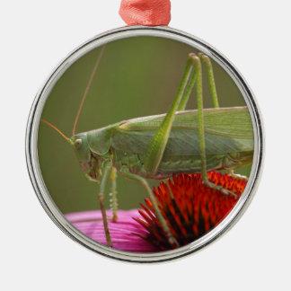 Großes grünes Bush-Kricket (Tettigonia Silbernes Ornament