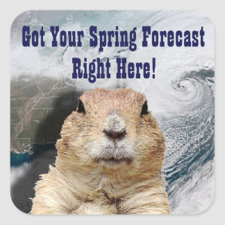 Groundhog Frühlings-Prognose Quadratischer Aufkleber