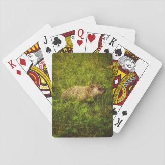 Groundhog in Spielkarten eines Feldes
