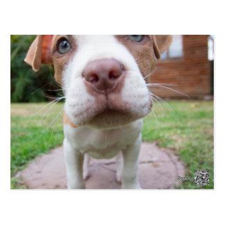 Grubenstier-Hundebraunnase nah Postkarte