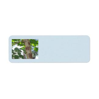 Grün-Blätter und Baumstamm mit cooler Barke