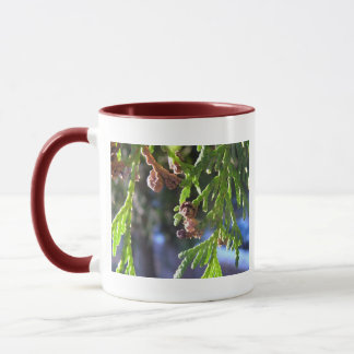 Grün-Blätter, Zypresse, Samen Tasse