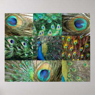 Grün-blaue Pfau-Fotocollage Plakate