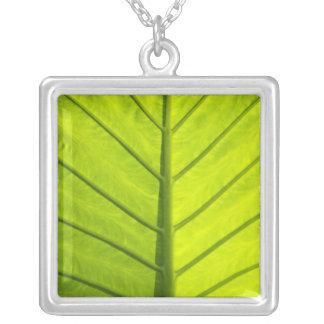 Grün veined Blätter des tropischen Laubs herein Versilberte Kette