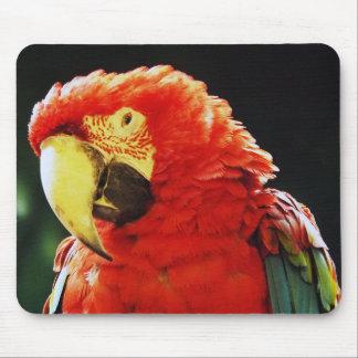 Grün Winged Macaw-Papageien-Vogel-Nahaufnahme Mousepads