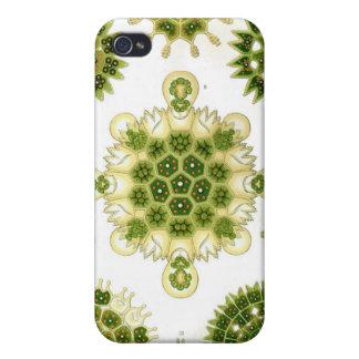 grüne Algen, iPhone 4 Fall iPhone 4 Cover