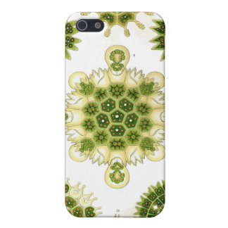 grüne Algen, iPhone 4 Fall Schutzhülle Fürs iPhone 5