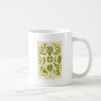 Grüne Algen-Tasse Tasse