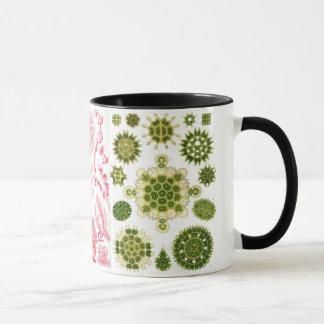grüne Algen, verschieden, haeckel Tasse
