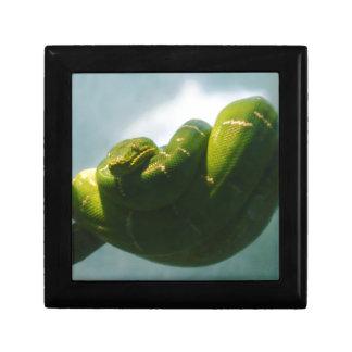 Grüne Baum-Boa Geschenkbox
