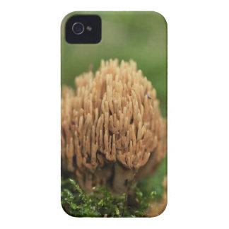 Grüne befleckende korallenrote Pilze (Ramaria iPhone 4 Hüllen