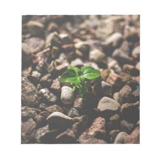 Grüne belaubte Pflanze, die beginnt, auf beige Notizblock