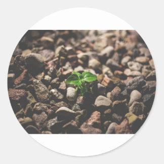 Grüne belaubte Pflanze, die beginnt, auf beige Runder Aufkleber