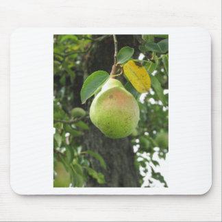 Grüne Birne des Singles, die am Baum hängt Mousepads