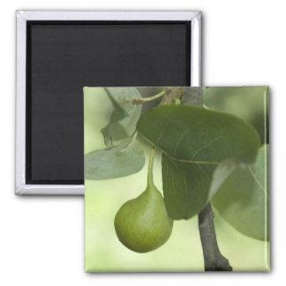 Grüne Birne Quadratischer Magnet