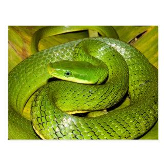 Grüne Bush-Ratten-Schlange Postkarte