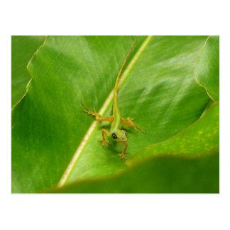 Grüne Eidechse auf grünem Blatt Postkarte