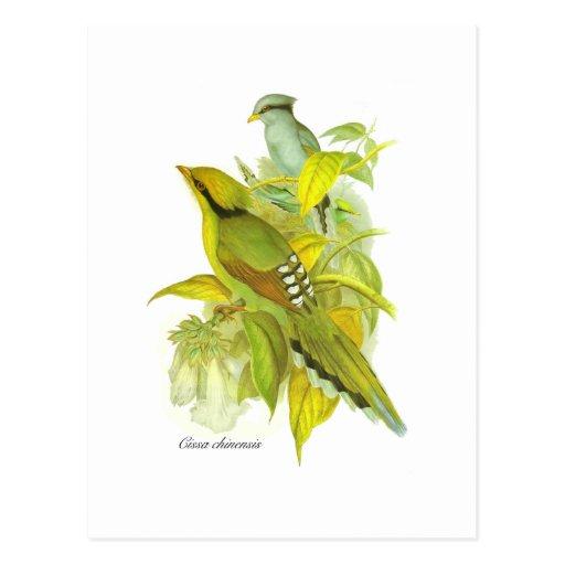 Grüne Elster Postkarte