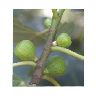 Grüne Früchte eines gemeinen Feigenbaums Notizblock