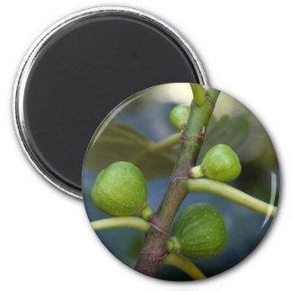 Grüne Früchte eines gemeinen Feigenbaums Runder Magnet 5,1 Cm