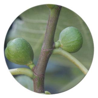 Grüne Früchte eines gemeinen Feigenbaums Teller