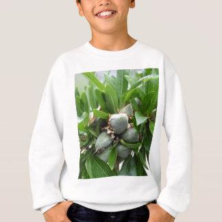 Grüne Früchte eines Mandelbaums Sweatshirt