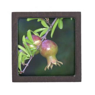 Grüne Granatapfelfrucht Schmuckkiste