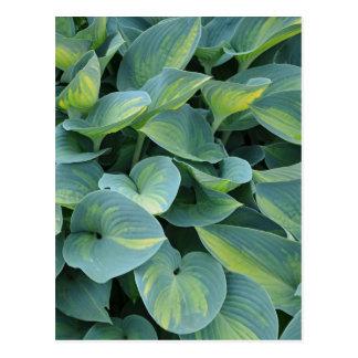 Grüne Hosta-Pflanzen-Druckpostkarte Postkarte