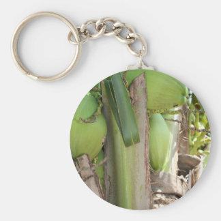 Grüne Kokosnüsse auch Schlüsselanhänger