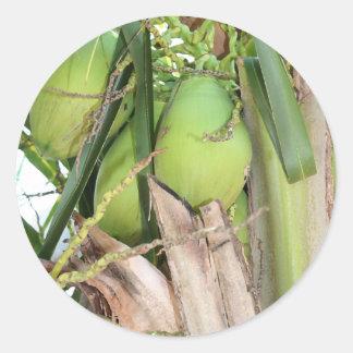 Grüne Kokosnüsse Runder Aufkleber