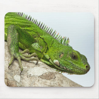 Grüne Leguan-Mausunterlage Mousepad
