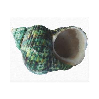 Grüne Marinemolluske-Muschel eingewickelter Leinwanddruck