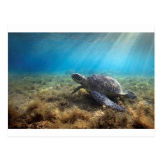 Grüne Meeresschildkröte, die sich underwater Postkarte