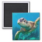 Grüne Meeresschildkröte, die über Korallenriff Quadratischer Magnet