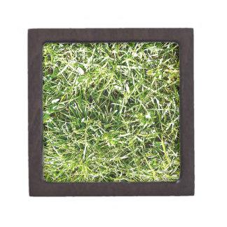 Grüne Natur treibt natürliche natürliche grüne Bäu Schachtel